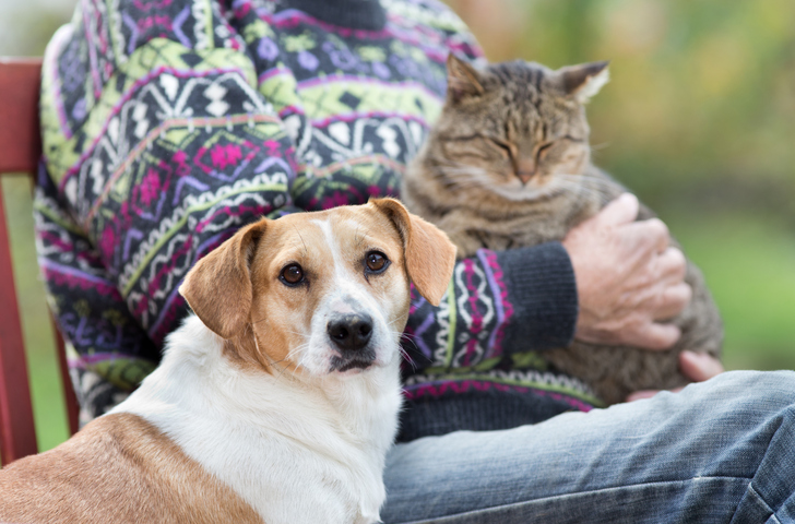 Pets are Living Longer and That May Bring New Challenges to Owners